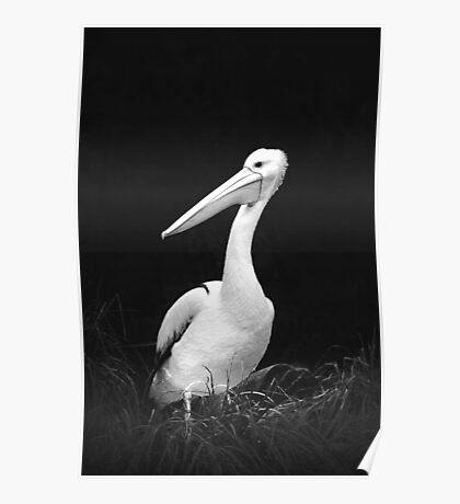 Animals VII Poster