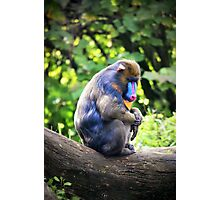 Animals IV Photographic Print