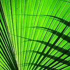 green fan by yvesrossetti