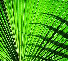 green fan by yvesrossetti