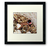 crested gecko! Framed Print