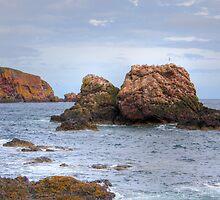 St. Abbs Rocks II by Tom Gomez