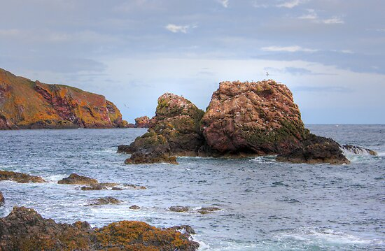 St. Abbs Rocks II by Tom Gomez