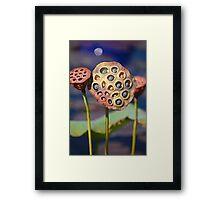 Beneath the lotus moon Framed Print
