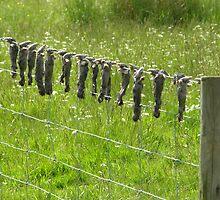 Mole-catcher's warning!  UK by jay12