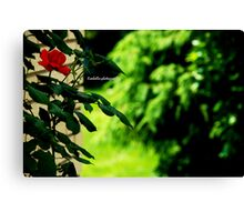 one rose, one love Canvas Print