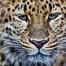 Leopard Portrait by Kathy Weaver