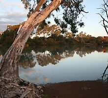 Reflections of  the River Murray,S.A. by elphonline