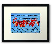 Vine wire Framed Print