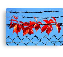 Vine wire Canvas Print