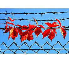 Vine wire Photographic Print