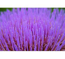 Cauliflower Flower Head Macro Photographic Print