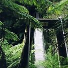 Suspention Bridge by Cassie Hough