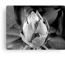 The BUD ^ Canvas Print