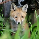 baby Fox by whisperjo
