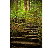 Up the garden path, The Dandenongs Photographic Print