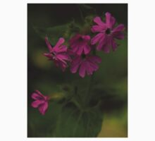 Pink Campion in Prehen Woods, Derry Kids Clothes