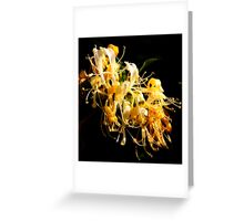 Honeysuckle Abundance Greeting Card
