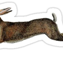 Leaping Hare Sticker