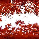 Momiji: Lake Ashinoko, Japan by Alfie Goodrich