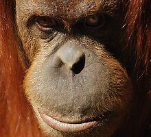 Portrait by monkeyboy