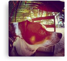 What's goin' on in the dog's head Canvas Print
