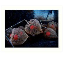 Hozuki [Chinese lantern plant]: Abergavenny, Wales, UK Art Print