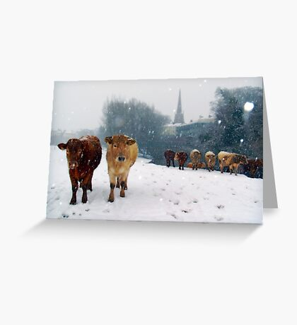 Cattle in the snow, Monmouth, Wales, UK. Greeting Card