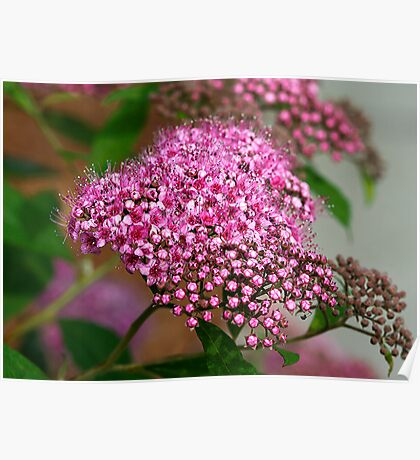Tiny Pink Flowers Poster