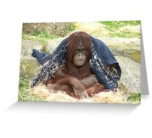 Just Chillin Greeting Card
