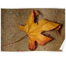 Last of the Autumn leaves Poster