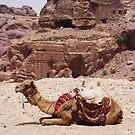 Camel Break by Marmadas