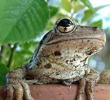 Mr Toad resting by Kurt Bippert