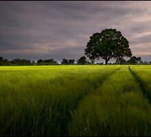 Fields of Barley by Tony Murphy