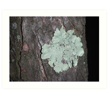 I'm a fun-gi  -- and I'm a lichen this tree! Art Print
