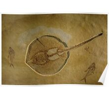 Flat Fish Fossil Poster