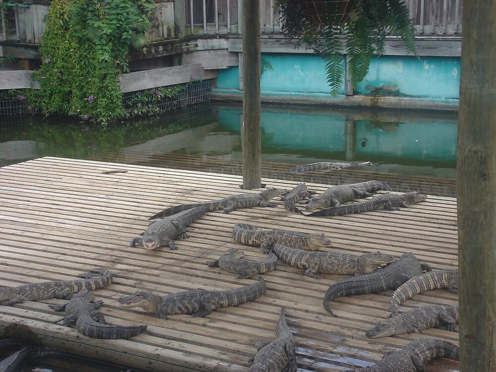 Alligator Alert by DJMarchese