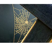 Sunkissed Web Photographic Print