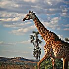 Galloping Giraffe by Scott Ward