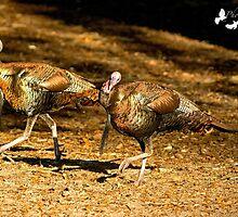 Two Turkey Buddies by TJ Baccari Photography