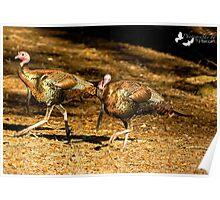 Two Turkey Buddies Poster