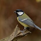 Great tit - I (Parus major) by Peter Wiggerman