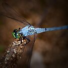 Dragonfly Twilight by Bonnie T.  Barry
