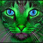 purple and green cat by andymars