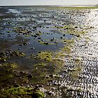 Low Tide by Barry Goble