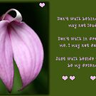 Friendship Flower by Kimberly Palmer