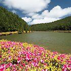 Azores Islands Landscapes by Gaspar Avila