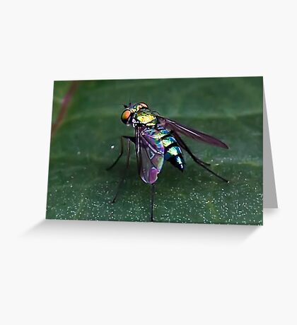 Iridescent  Fly Greeting Card