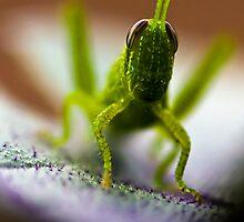 Grasshopper on Eggplant Leaf by Eric Ordinario