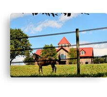 A Horse and A Barn Canvas Print